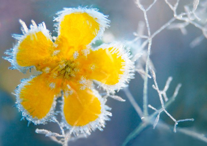 Easy Ways to Protect Your Plants From Frost