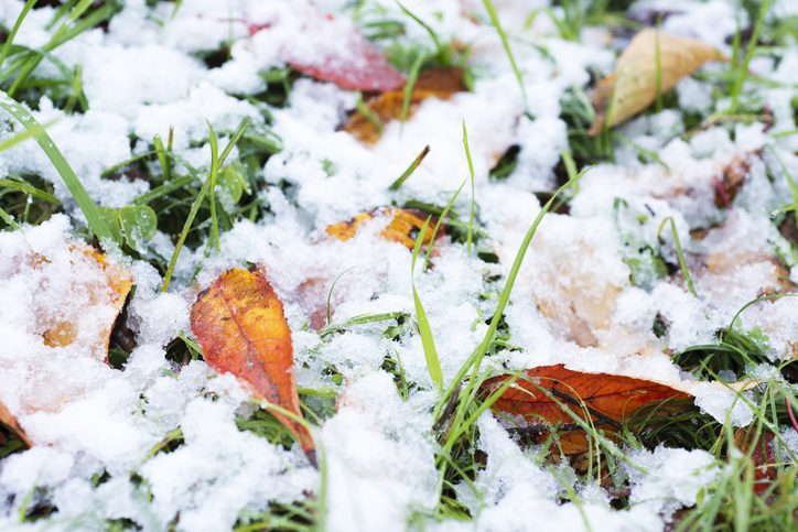 3 Ways to Prepare Your Landscaping for Winter